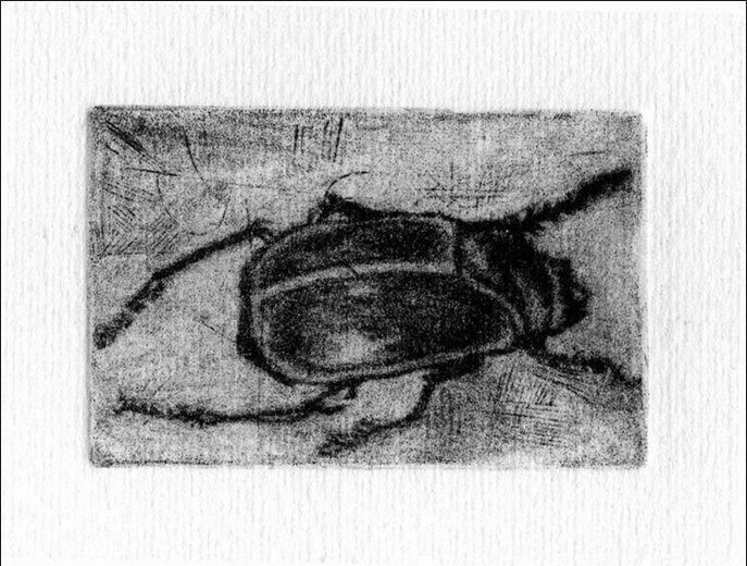 scarabeo, incisione di Pietro Antonio Bernabei