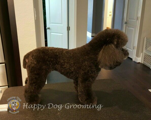 87 best images about Happy Dog Pet Grooming on Pinterest ... - photo#22