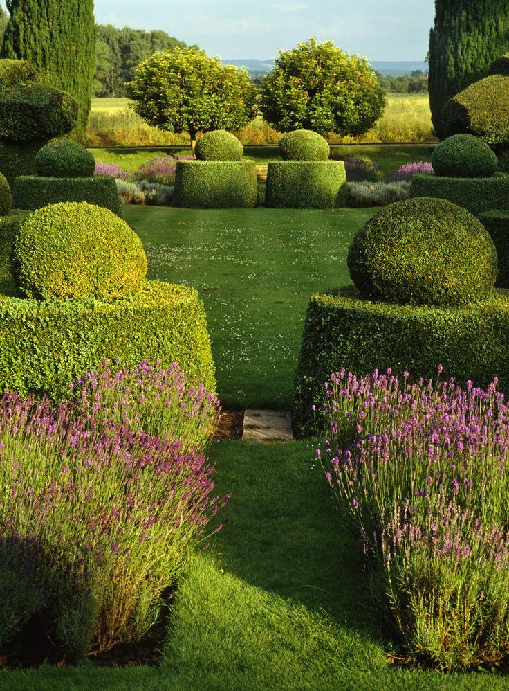 lavender and topiaries