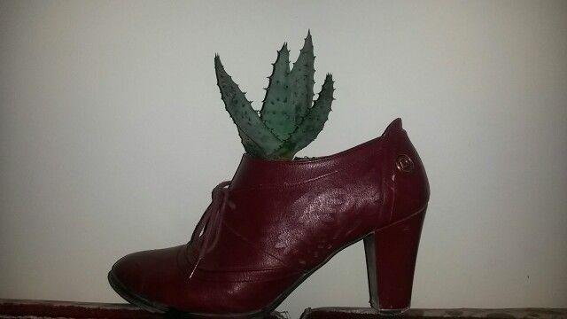 Ayakkabı saksı