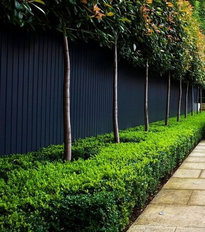 dark painted fence with planted trees, traditional landscape by Laara Copley-Smith Garden & Landscape Design
