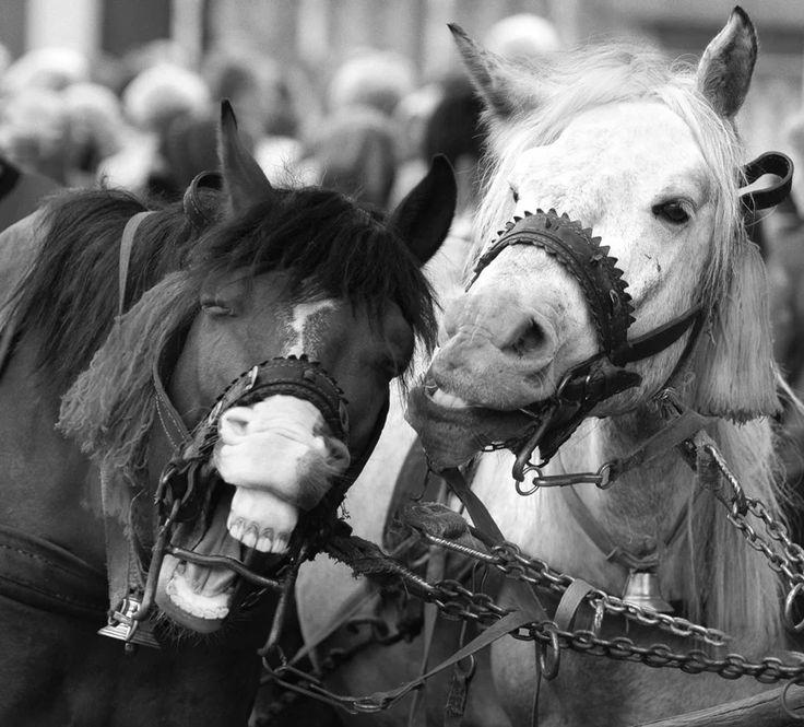 Смешные картинки с надписями лошади, днем рождения