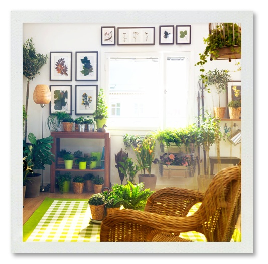 35 Indoor Garden Ideas To Green Your Home: 80 Best Indoor Garden Rooms Images On Pinterest