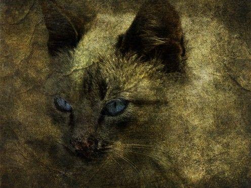 Blue eyes of a straycat
