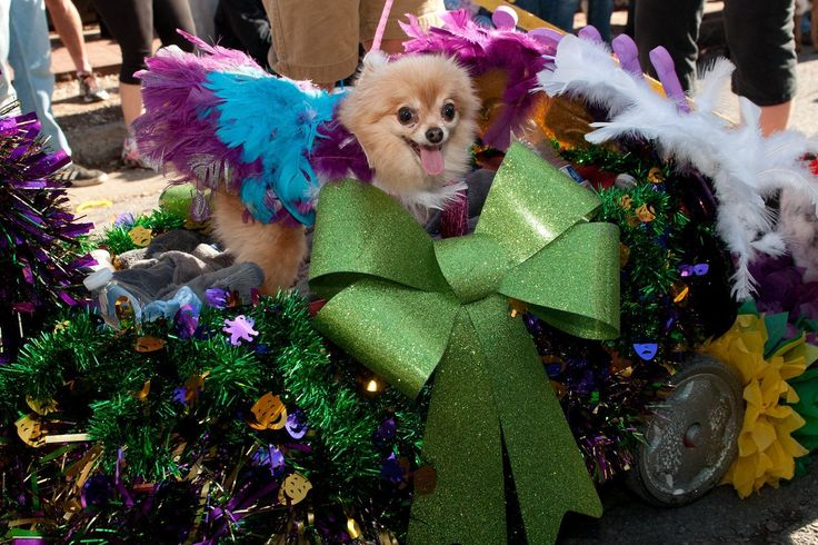 This weekend in Soulard: Lots of pets and lots of food : Entertainment