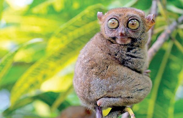 13 Small Animals With Big Eyes Looking So Cute Big Eyed Animals Jessica Paster Big Eyed Animals Cute Small Animals Animals