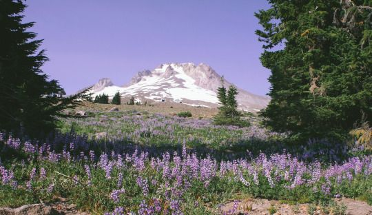 by Keith Carey  Mt. Hood, Oregon