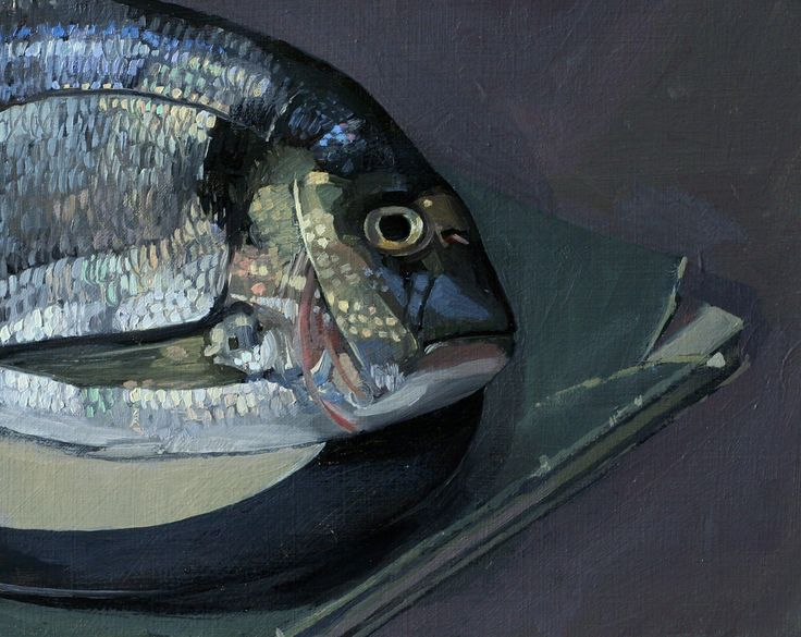 Gilt Head Bream - by Sam Dalby