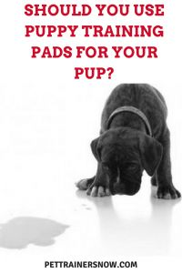 What On Earth Are Puppy Training Pads? What Are They Used For And Is It True That They Are Only Usefull In Small Spaces And Other Dog Training Tips And Ideas From PetTrainersNow.com
