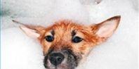 How to Make Oatmeal Shampoo for Dogs | eHow.com