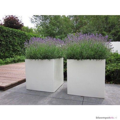 witte bloempotten tuin - Google zoeken