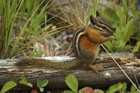 How to Keep Chipmunks Out of Your Potted Plants | eHow