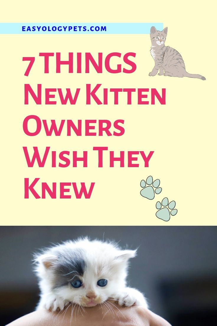 7 Things New Kitten Owners Wish They Knew Pet Quotes Cat Kitten Care Getting A Kitten
