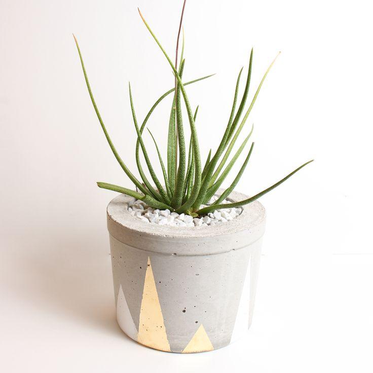 Concrete Planter, XXLarge with plant