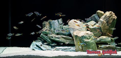 Acuario tropical 8 TarracoGoldfish