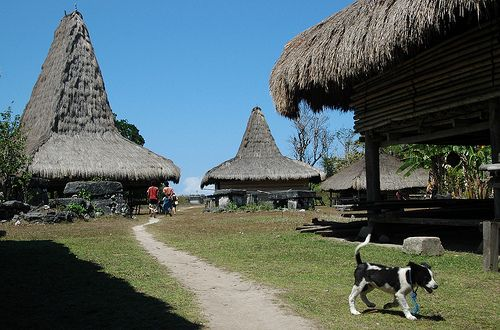 Bondokawangu Willage - Komodo, Indonesia. Bondokawangu village in Kodi area - West Sumba, the picture shown how tall the houses are.