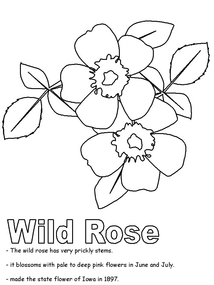 united states activities new mexico state flower wild prarie rose