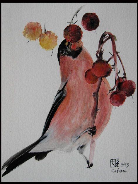 #birds #watercolor #ink [Dom Fafe | Pyrrhula pyrrhula, Teresa Jané]