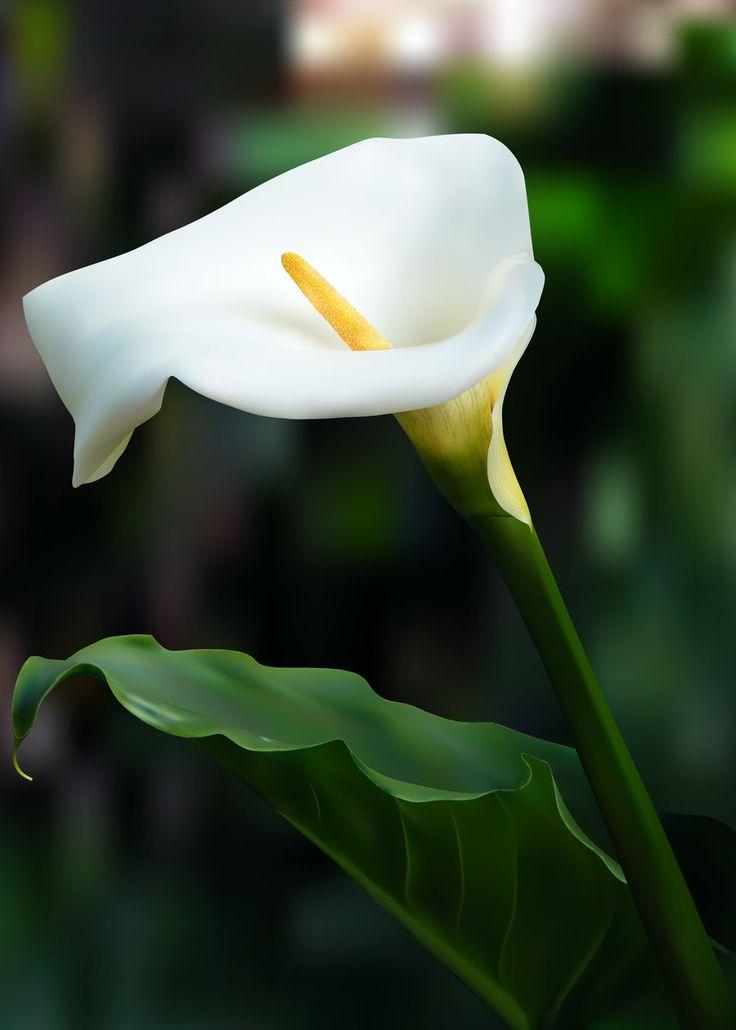 190 best gumpast calla lily images on pinterest flowers calla lily and calla lillies - Calla Lily Flower