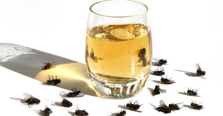 Con il caldo le mosche E ZANZARE sembrano essersi impossessate di casa vostra? Ecco i rimedio naturale fai da te per tenerle lontane.