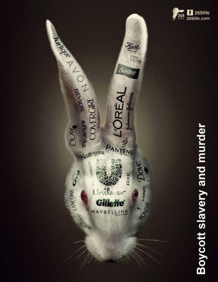 Boycottez l'esclavage et les assassinats ! | Le monde des lapins - Tout sur les lapins : espèce, littérature, jeux, célèbres, ...