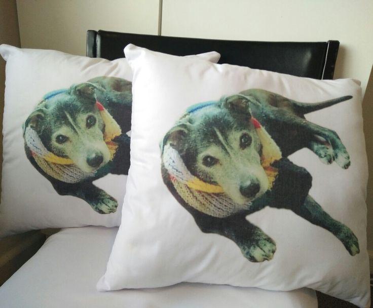 Big Deezy's Staffy and Big Breeds Shop Australia. www.BigDeezy.com // @bigdeezydotcom  #bigdeezydotcom #staffies #pitbulls #bullybreeds #staffy #staffordshirebullterrier #bigdogbreeds #custom #clothes #printing #pets #Dogs #adoptdontshop #dontbullymybreed #shop