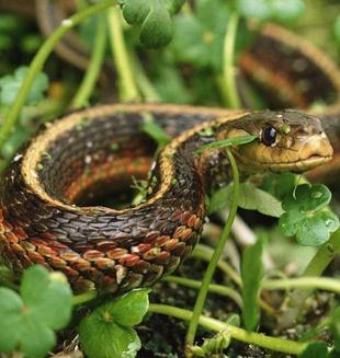linda serpiente <3