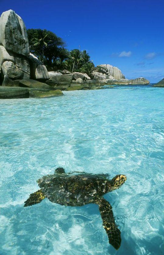 Isla del Coco, Costa Rica, mezclándose con las tortugas de mar,