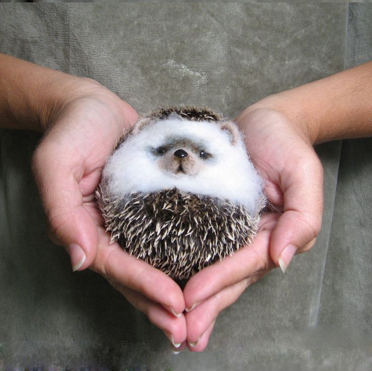 """{hedgehog """"Lump""""} I totally thought this was a real hedgehog, but it's made of wool! wow"""