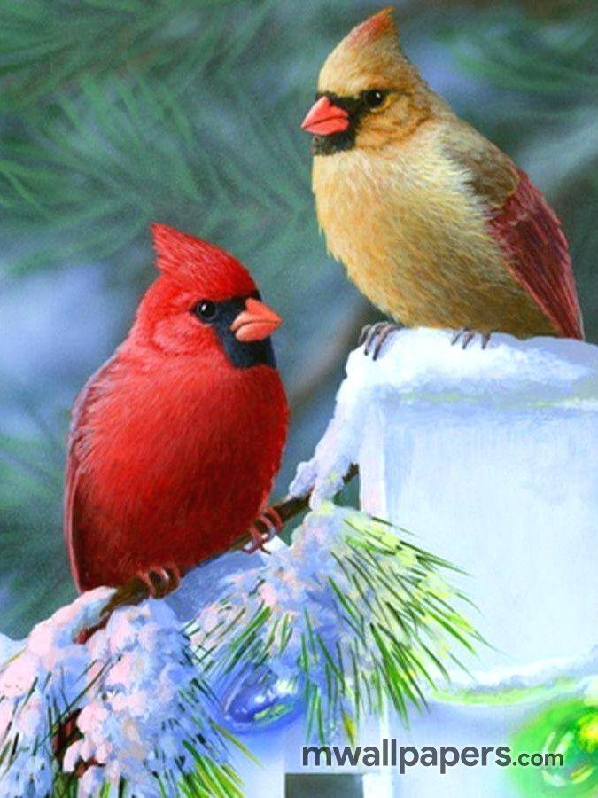 Birds Hd Wallpaper 318 Bird Cute Birds Birds
