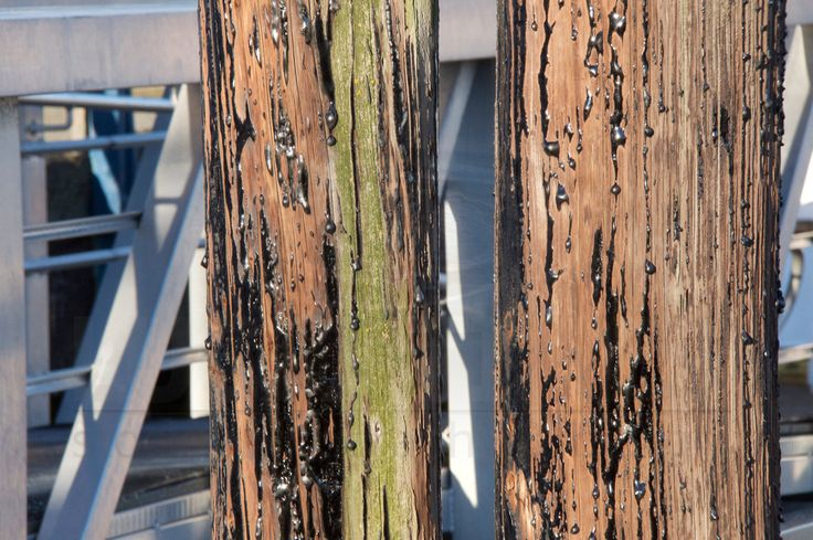 Creosote soaked colourful pilings