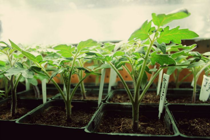 Best vegetables and fruits to grow under T5 grow lights