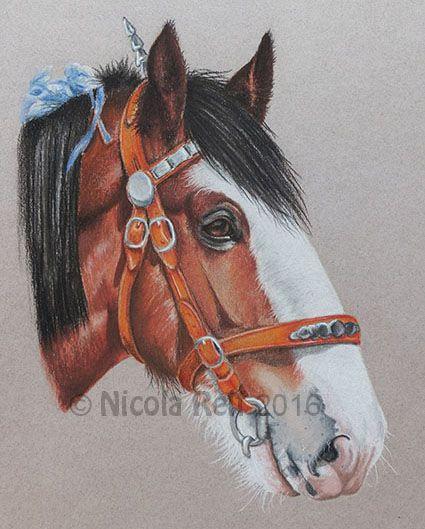 Clydesdale Horse (photo reference Ainslie Gillies Patel). Pastel Pencil on Canson Mi Teints Paper. Pet portrait