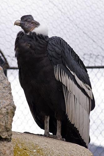 The mighty Talon