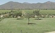 G1 Rio Grande do Sul - Campo e Lavoura - Catálogo de Vídeos - Confira um passeio pela vinícola produtora da famosa linha Casillero del Diablo