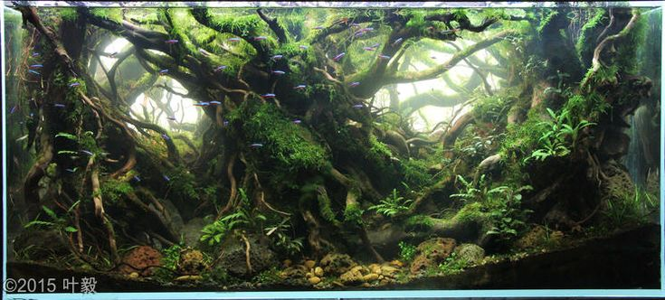 ... ideas 40 breeder aga aquascaping aquascaping contest forward 2015