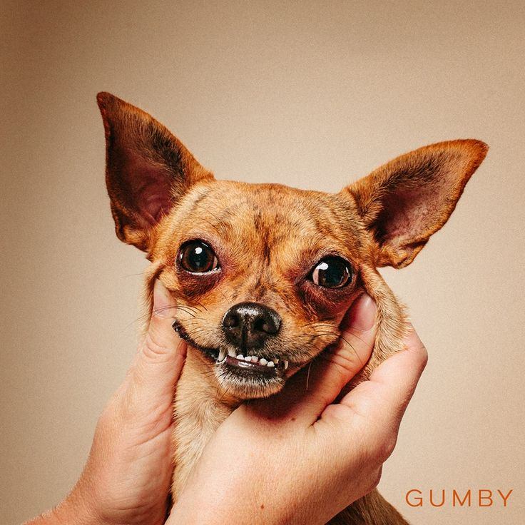 11/15/16-HOUSTON - Gumby is a beautiful brindle 1.5yr old 7lb chi. She is a playful girl and needs a home with another dog or one that can play or walk her daily. Gumby has the puppy personality since she is still young. She loves chew toys, has the pup energy. Gumby does well with children over the age of 10 due to her size. Would do great solo or with another doggie companion in the home www.tinypawsrescue.com for an application Young, Female, Small