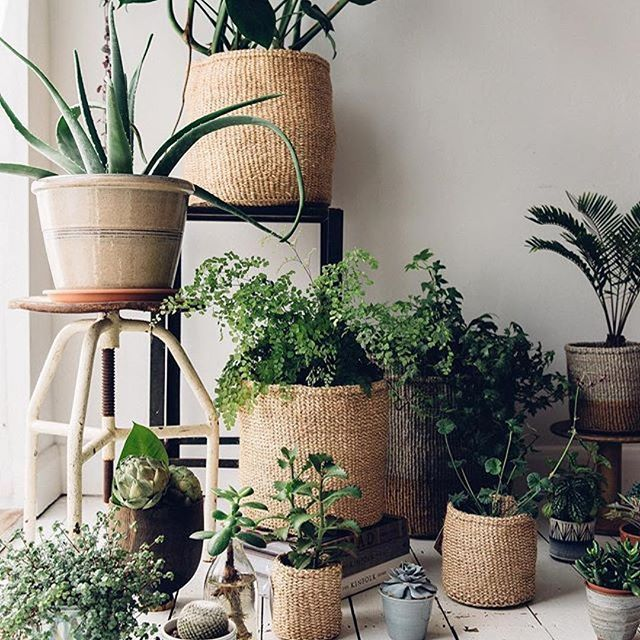 Now that's how to do house plants! Via @thefuturekept