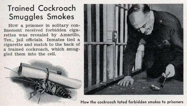 Trained Cockroach Smuggles Smokes - Popular Science (Jun, 1938)