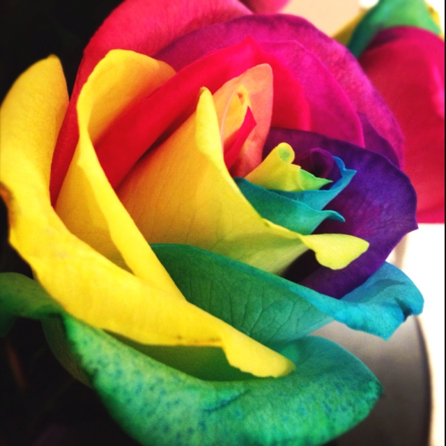 83 best roses images on pinterest beautiful flowers for Rainbow dyed roses