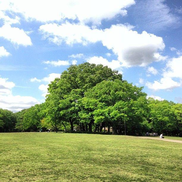東京。砧公園。