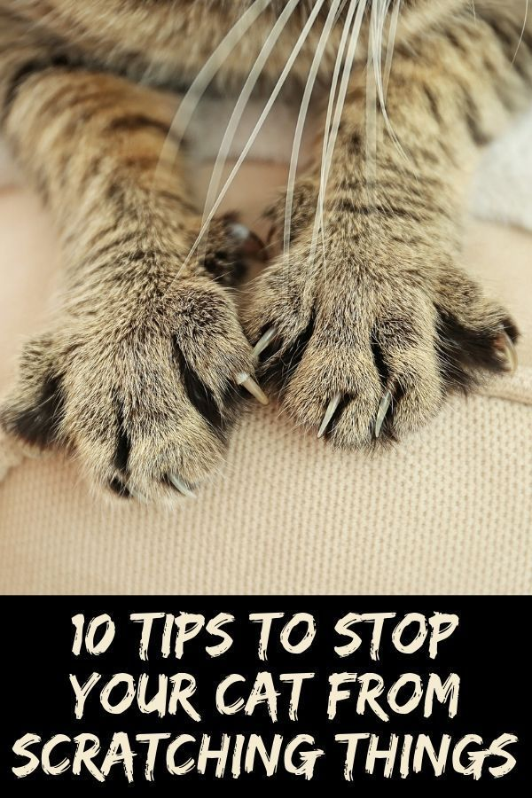 10 Ways To Stop Your Cat From Scratching Things Cat Care Tips Cat Training Cat Care