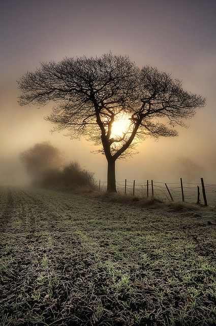 frost - Most Amazing Photography