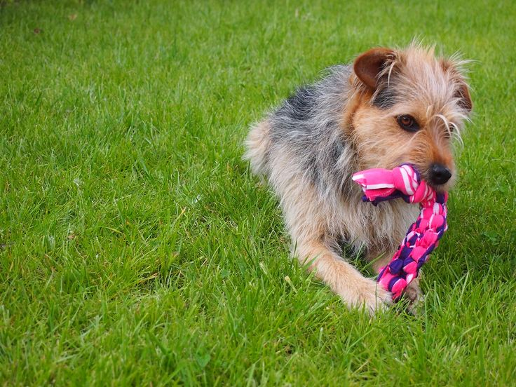 DIY - jak zrobić zabawkę dla psa. Toys for dog diy