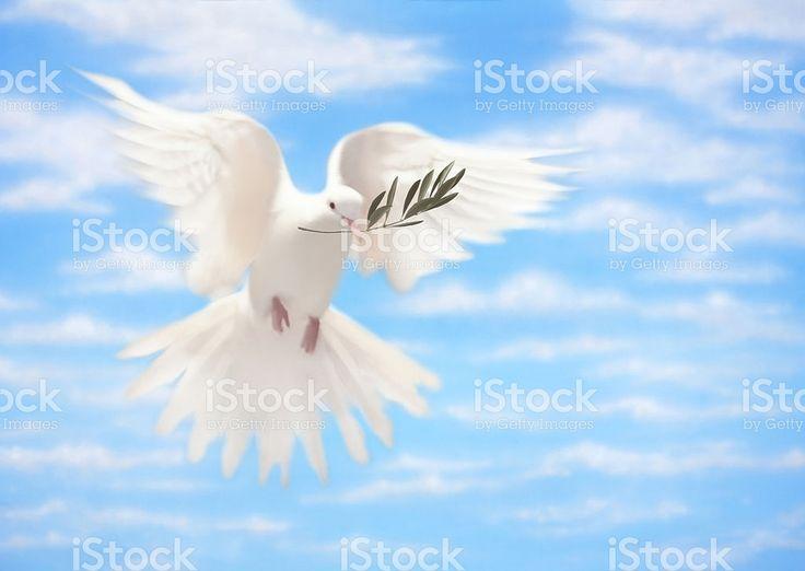 Pombo branco de paz com Olive Branch foto royalty-free