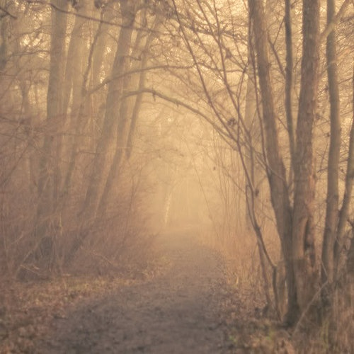 pathDaydreami Things, Dreams, Enchanted Forests, Autumn Fall, Forests Naturefantasi, Trees, Forests Paths, Art Forests, Forests Photography