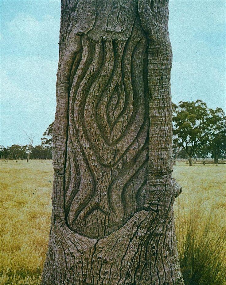 Best carved trees images on pinterest aboriginal art