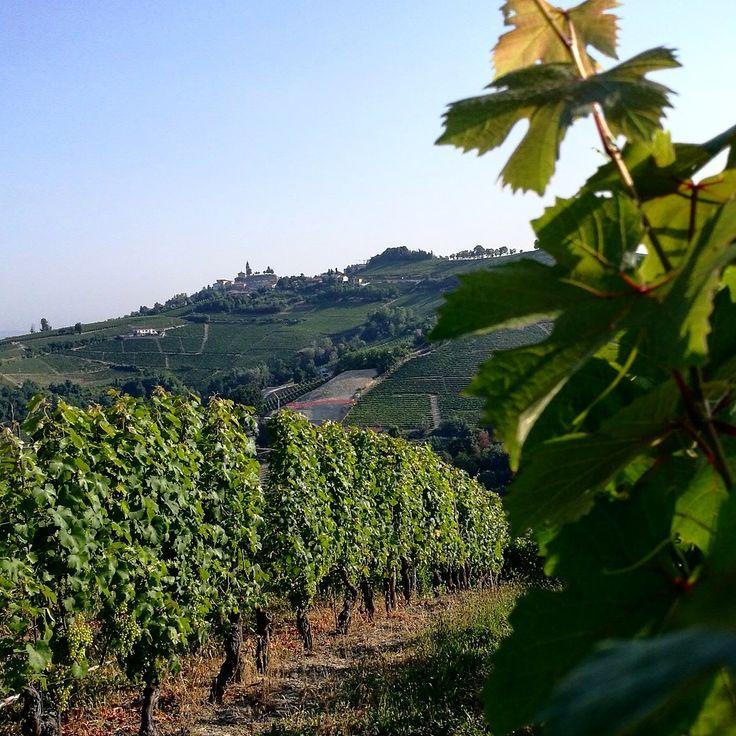 Diano d'Alba #dianodalba #langhe #langheunesco #unesco #vignadelbric #pietro #dianodalbasuperiore #instalanghetti #instawine #wine #igersitalia #ig_piemonte #ig_cuneo #nofilters #cool #paesaggidivini #loves_united_cuneo