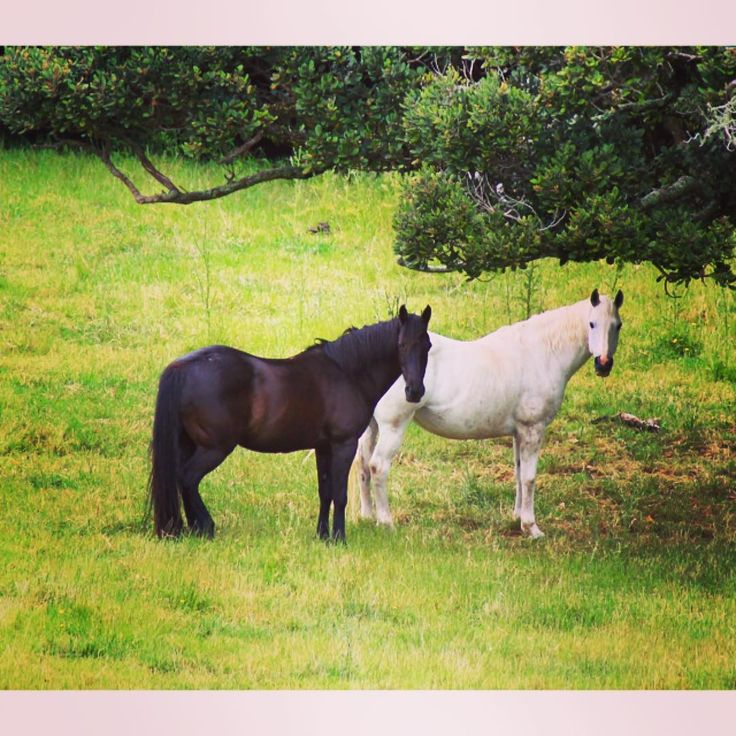 Friday love   Photography by Alida  #equestriananz #friends #love #horselove #horselovers #horseloversofinstagram #equine #equinephotography #equestrian #equestrianstyle #equestriangirl #beautifulhorses #equestrianstyle #equestrianlife #equestrianapparel #ilovemyhorse #ponyclub #showjumping #showjumper #horseracing #itsalifestyle #aucklandcity #aucklandlive #newzealand