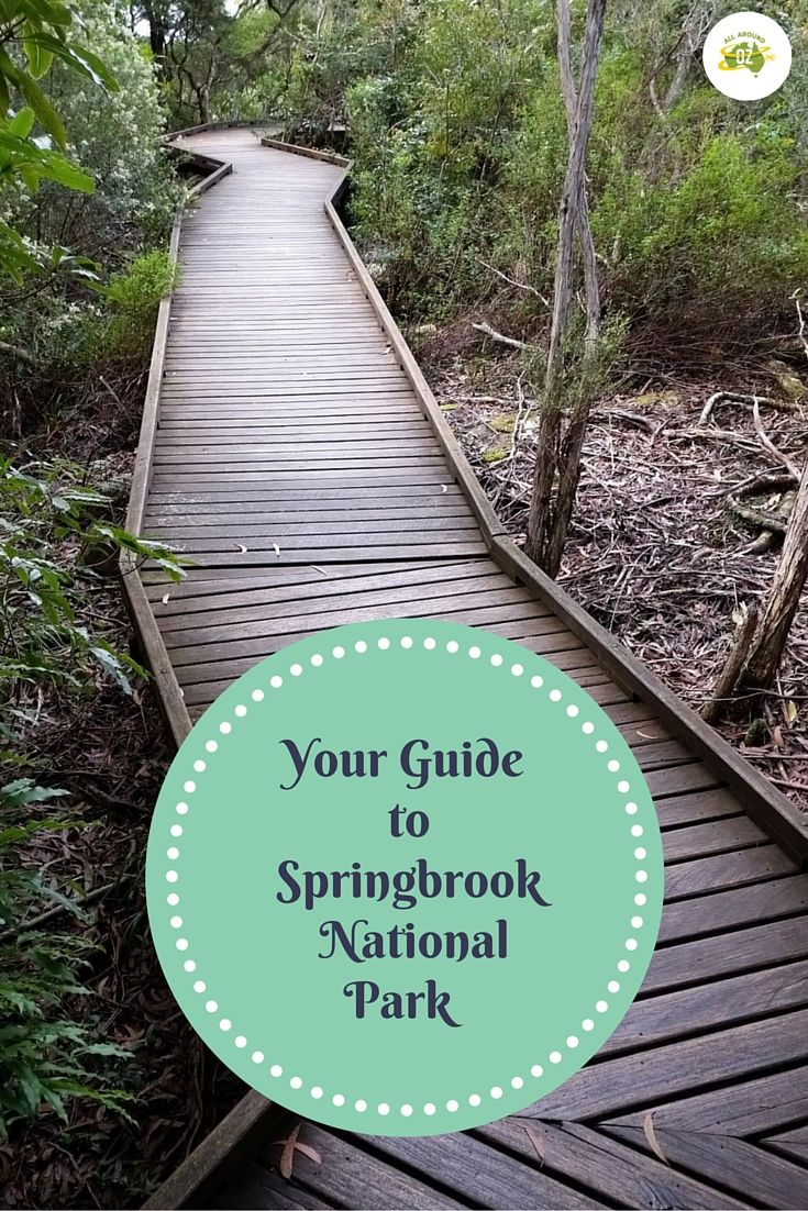 Springbrook National Park in the Gold Coast Hinterland has got to be one of the best around